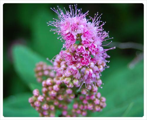 sejour a stockolm fleur