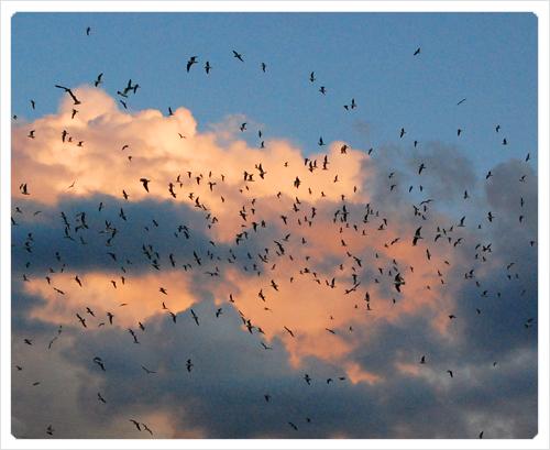 bonne-nuit-les-oiseaux