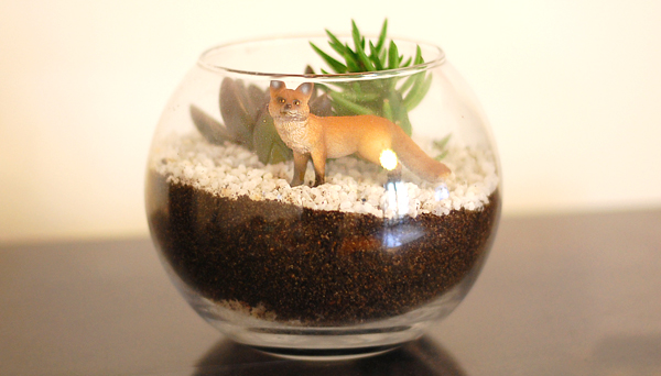 tutoriel DIY mon terrarium avec renard