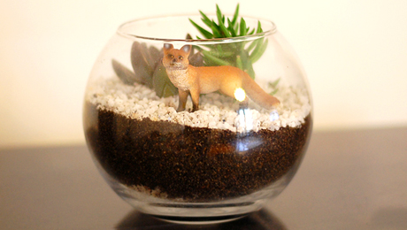 tutoriel DIY  terrarium