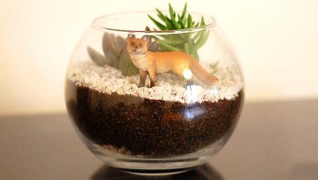 tutoriel DIY  terrarium