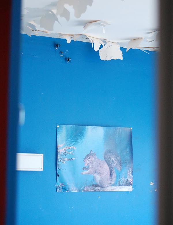 mur bleu poster ecureuil