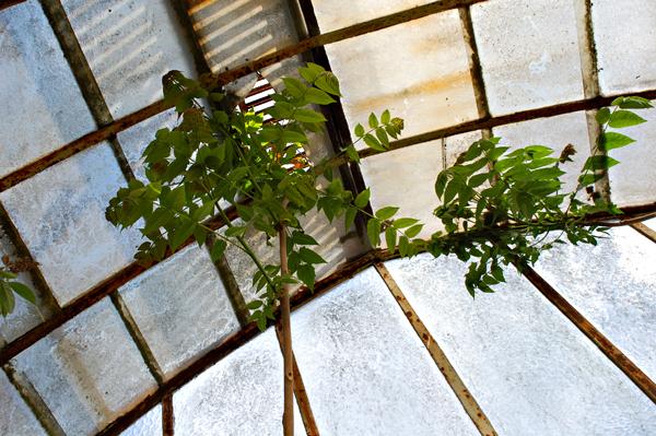 plantes verrière