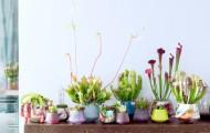 Atelier DIY : Ma Plante Mon bonheur