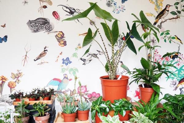 Mama Petula : concept store végétal