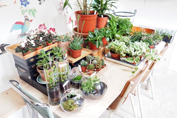 Mama Petula : atelier végétal