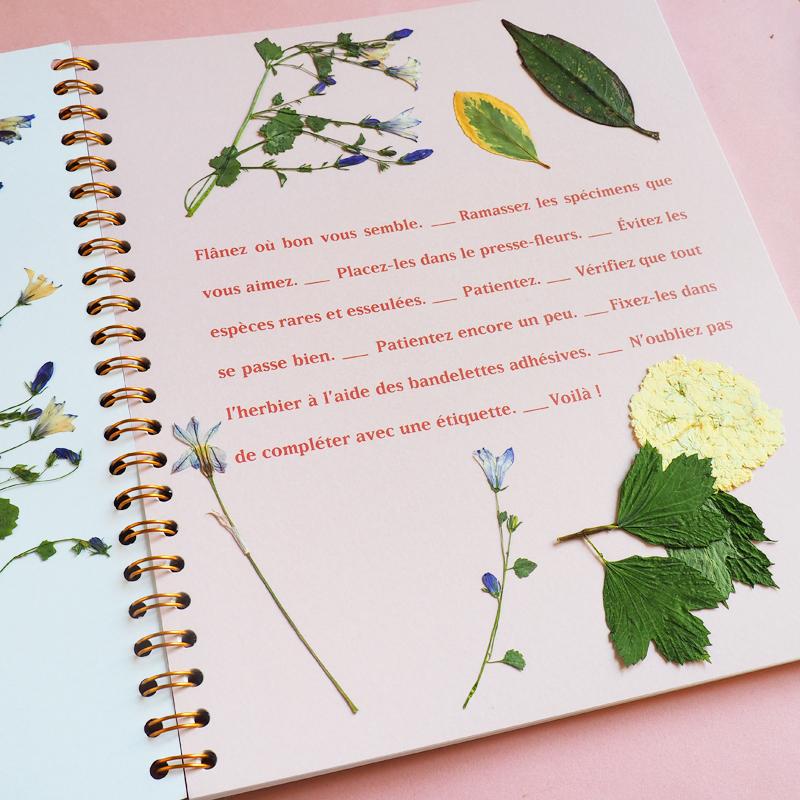 Herbier presse-fleur Specimen