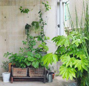 arrosage plantes jardinage