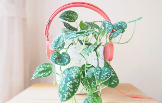 podcasts pour plant lovers